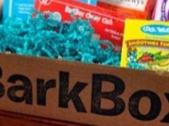 @Fridalovelace repping Barkbox in the Karma iOS app.